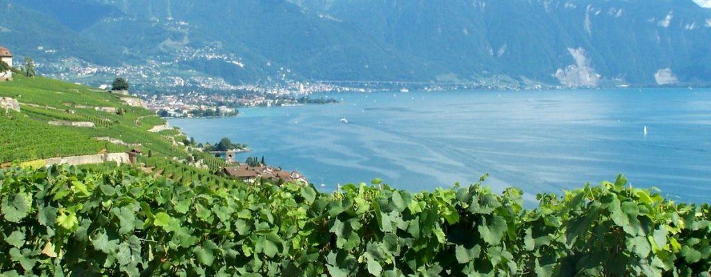Walking the Swiss Wine Trail